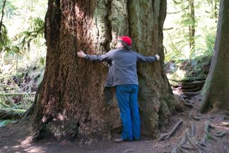 DSC_0172 Rain Forest, Vancouver Island, BC