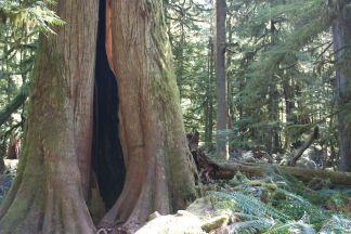 DSC_0173 Rain Forest, Vancouver Island, BC