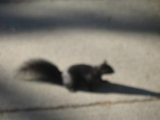 "IMG_0064 ""Squirrel!""Cameron Lake, BC"