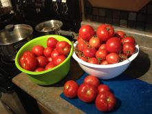 IMG_1800 Home Grown Tomatoes, Ft St John, BC