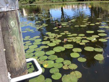 IMG_3209 Mill Lake, BC